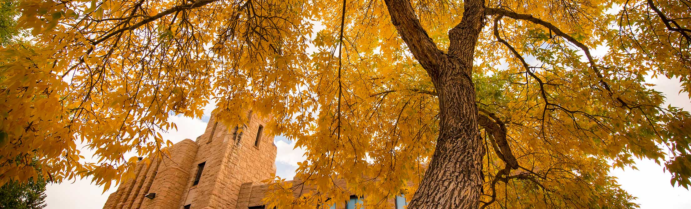 Student Union in the fall, seen from behind trees with gold leaves