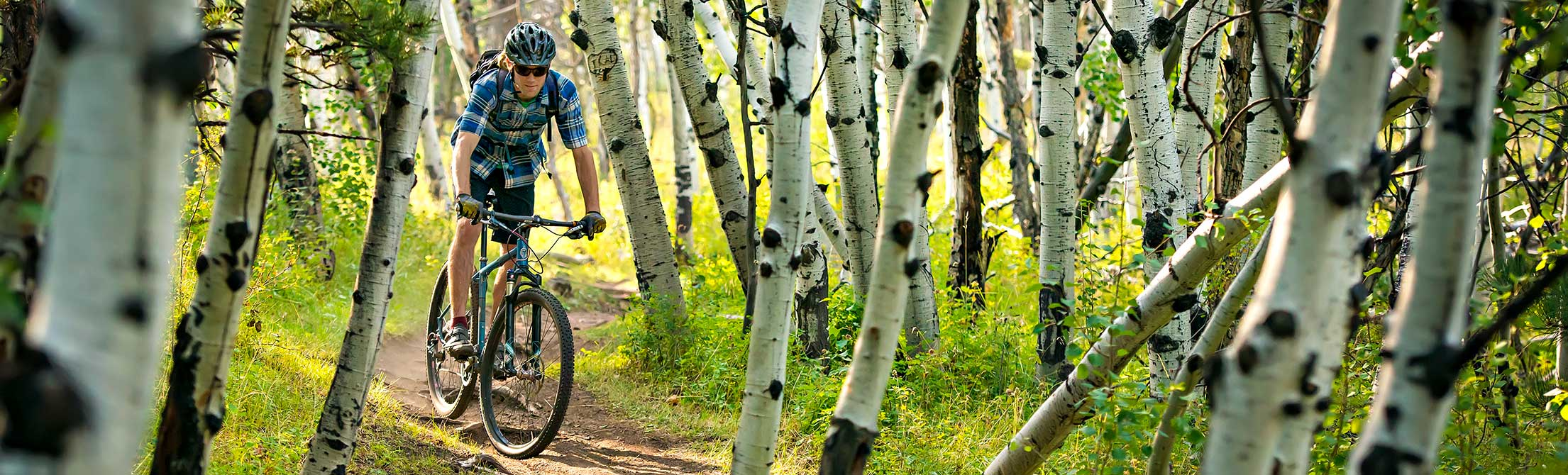 mountain biker in aspen trees