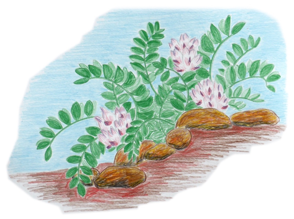 For many species, particularly those that occur primarily on nonfederal lands, states have led recovery implementation. In 2018, conservation carried out by Utah state agencies helped move the deseret milkvetch off of the federal list of endangered and threatened plants.