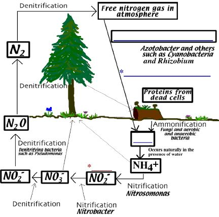 Microbiology lectures molb 2210 for Living things found in soil