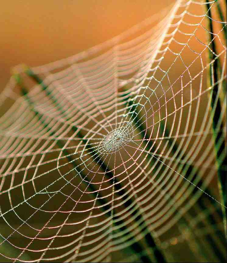 spider silk Maybe nothing is as special about spiders as their use of silk, and once you begin looking for spider silk, it's just everywhere for example, the web at the right is a very common kind of web, one that probably could be found in your backyard, too.
