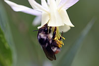 UW Professors Receive NSF Grant to Collaborate on Bumblebee Research, Art