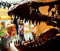 little girl looking into mouth of T-rex skull