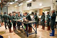 students in green coveralls and brown boots watching an animal necropsy