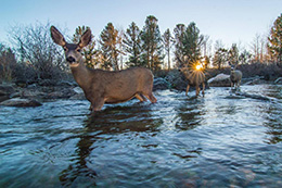 deer crossing creek