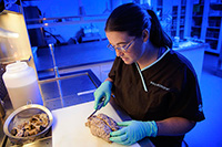 woman in lab smock and gloves handing a brain