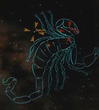 constelleation of scorpion outlined in the stars
