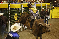 man riding a bull in a rodeo arena