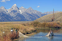 people putting a net into a stream with Teton mountain peaks in background