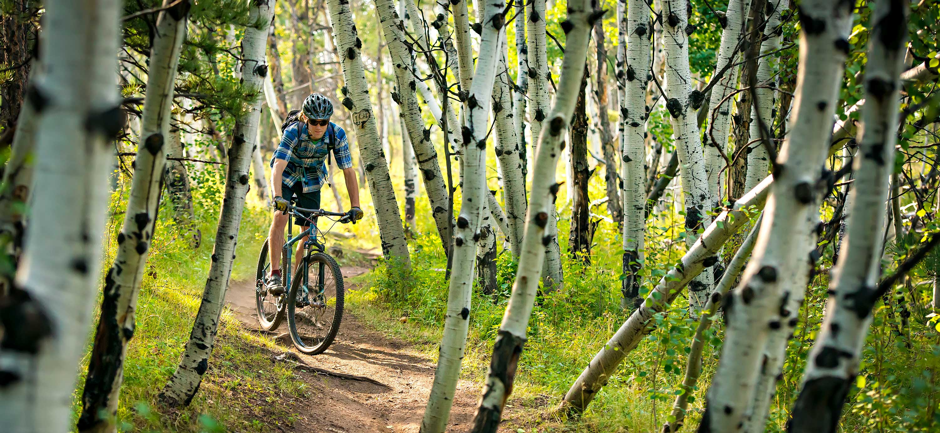 A mountain biker riding through the Medicine Bow Forest