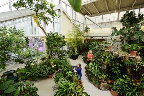 Williams Conservatory | Botany Department | University of ...